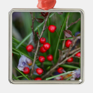 Small red berries on a Cotoneaster bush. Metal Ornament