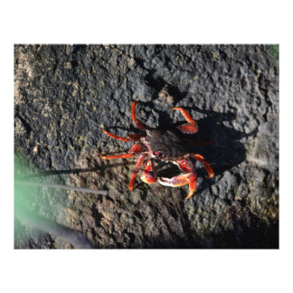 small red crab on rock animal nature flyer