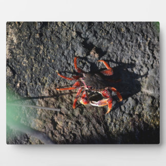 small red crab on rock animal nature plaque