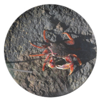 small red crab on rock animal nature plate