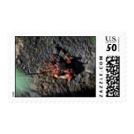 small red crab on rock animal nature postage