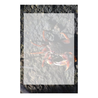 small red crab on rock animal nature stationery