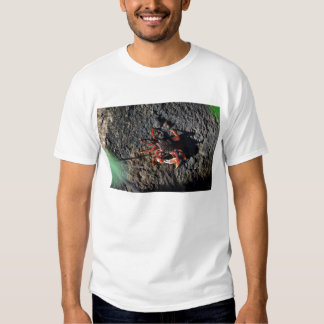 small red crab on rock animal nature T-Shirt