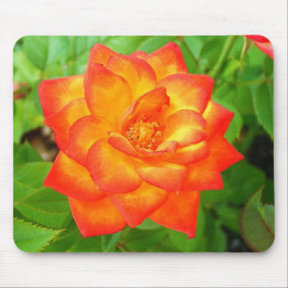 Small Red-Yellow Rose Mouse Pad