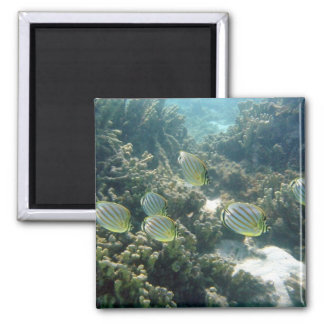 Small School of Butterfly Fish 2 Inch Square Magnet