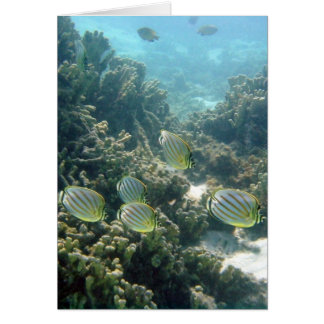 Small School of Butterfly Fish Card