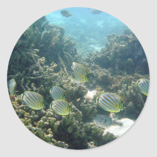 Small School of Butterfly Fish Classic Round Sticker