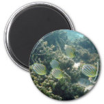 Small School of Butterfly Fish Fridge Magnets