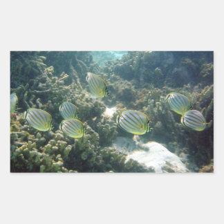 Small School of Butterfly Fish Rectangular Sticker