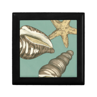 Small Shell Trio on Teal Jewelry Box
