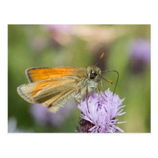 Small Skipper Butterfly Postcard