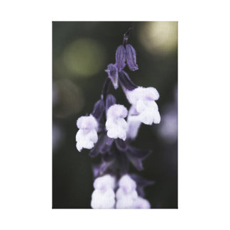 Small, Soft & Fuzzy Canvas Print