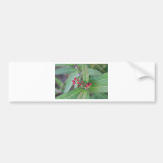 Small Spring Blooms Bumper Sticker