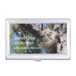 Small Squirrel in Pine Tree Fork Sunning Business Card Holders
