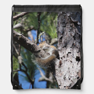Small Squirrel in Pine Tree Fork Sunning Backpack