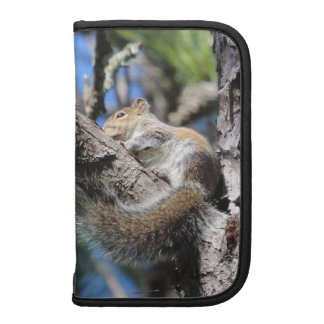 Small Squirrel in Pine Tree Fork Sunning Organizers