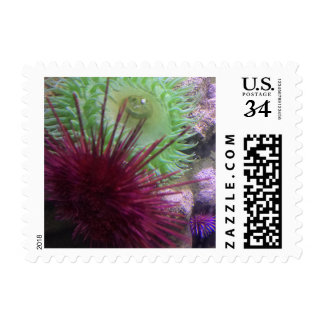 "Small Stamp, 1.8"" x 1.3"" PHOTOGRAPH OF SEA LIFE Postage"