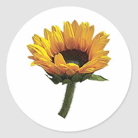 Small Sunflower Classic Round Sticker