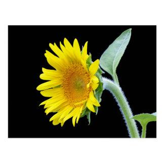 Small Sunflower Postcard