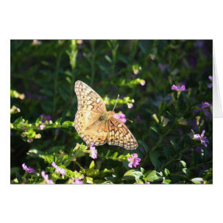 Small tan butterfly cards