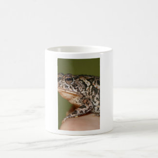 Small Toad Frog on finger against green door Mug