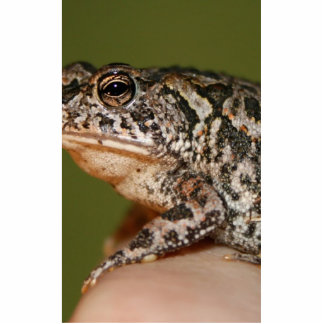 Small Toad Frog on finger against green door Photo Cutouts