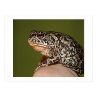 Small Toad Frog on finger against green door Postcard