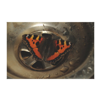 Small Tortoiseshell Butterfly In Sink Canvas Print