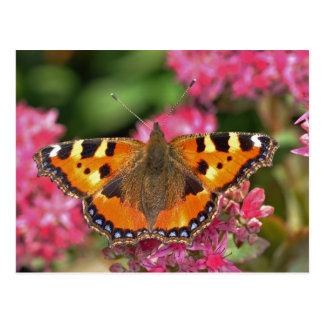 Small tortoiseshell butterfly postcard