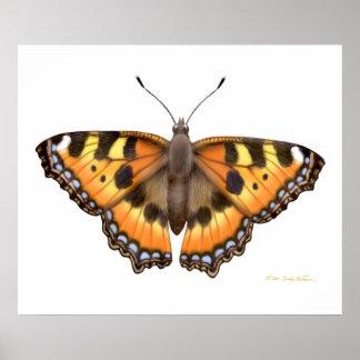 Small Tortoiseshell Vanessa Butterfly Print