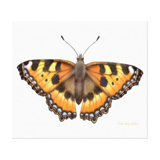 Small Tortoiseshell Vanessa Butterfly Wrapped Canv Gallery Wrap Canvas