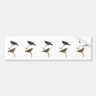 Small Tree Finch Bumper Sticker