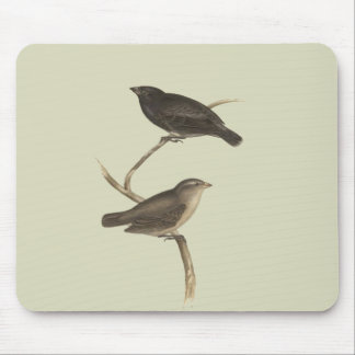 Small Tree Finch Mouse Pad
