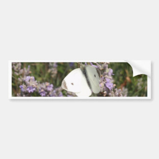 Small White Butterfly Bumper Sticker