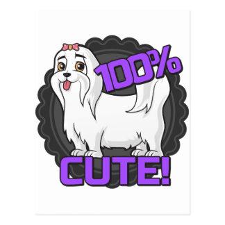 Small white dog - 100% cute! postcard