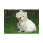 Small White Dog on Canvas Gallery Wrap Canvas