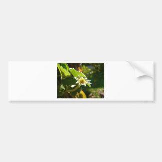 Small White Flower Car Bumper Sticker