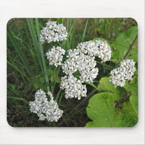 Small white flowers and buds mousepad