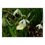 Small White on Snowdrop Spring Butterfly Card