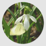 Small White on Snowdrop Spring Butterfly Classic Round Sticker