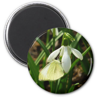 Small White on Snowdrop Spring Butterfly Magnet