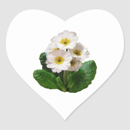 Small White Primroses Heart Sticker
