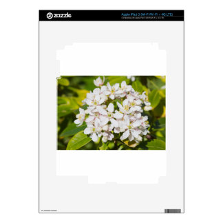 Small white wild flowers skin for iPad 3
