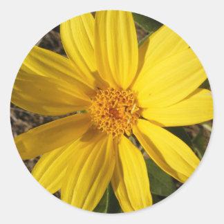 Small Wild Sunflower Sticker