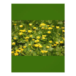 Small-yellow-flowers-in-grass1957 NATURE FLOWERS Y Flyer