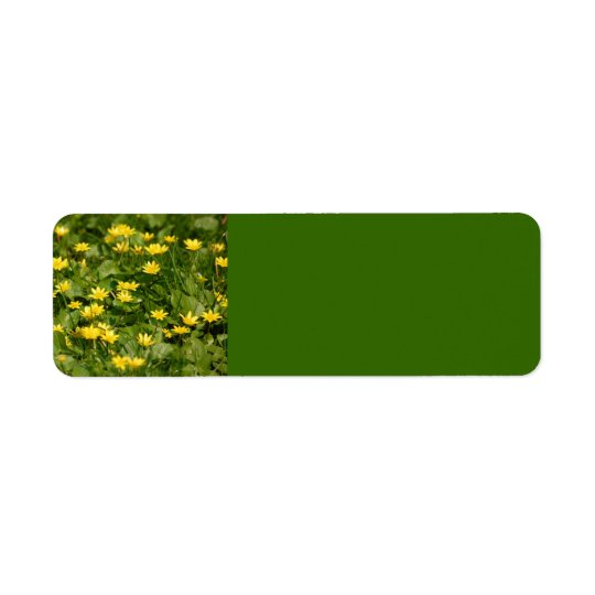 Small-yellow-flowers-in-grass1957 NATURE FLOWERS Y Label