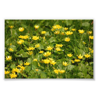 Small-yellow-flowers-in-grass1957 NATURE FLOWERS Y Photo