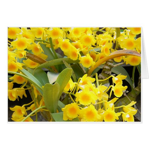 Small Yellow Orchids Greeting Cards