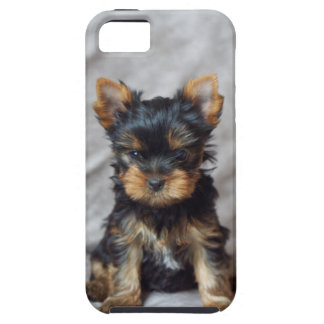 Small yorkie iPhone 5 covers
