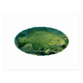 Smallmouth Bass Logo Postcard